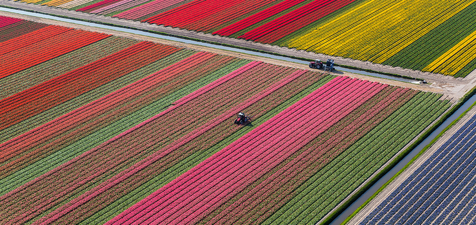 related_tulip fields_200402